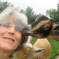 Kayam Farm Goats