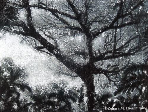 snowtreefla1