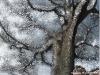snowtreefla2
