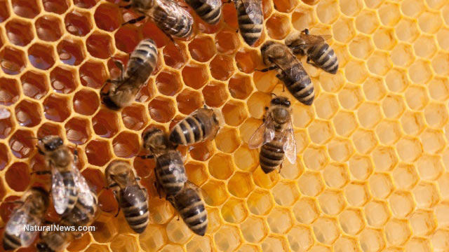 EPA knew pesticides were killing honeybees in the 1970s but punished those who spoke out