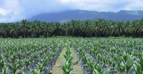 Norway nopalmoil