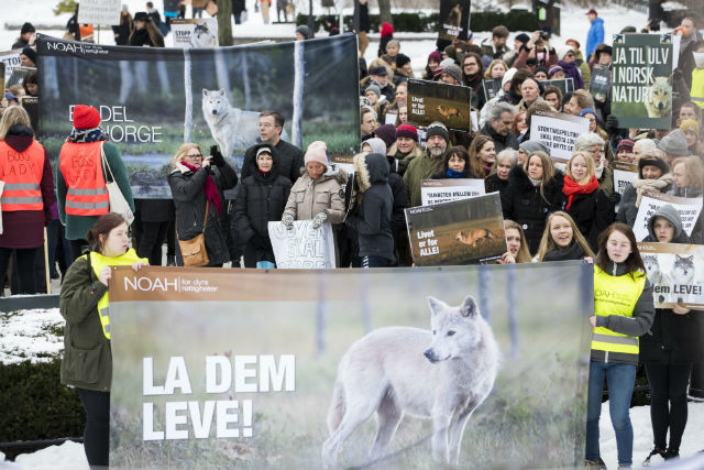 A protest against wolf hunting in Oslo last week. Photo: Ingrid Eide/NTB Scanpix