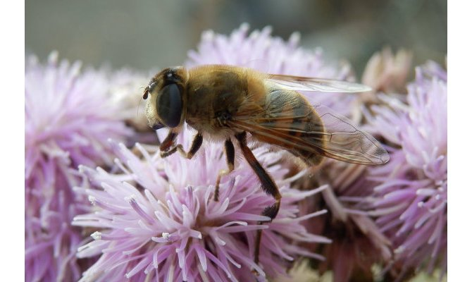 Norway Builds World's First Bee Superhighway