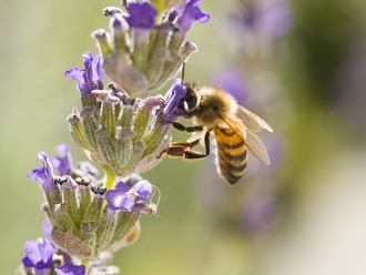 Tell Congress: Stop the pesticide that is killing bees