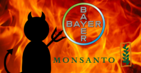 monsanto_bayer3