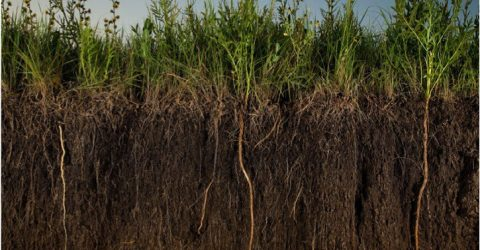 Regenerative Agriculture: our best shot at cooling the planet?