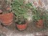 plantsruscombe