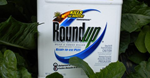 roundup-new